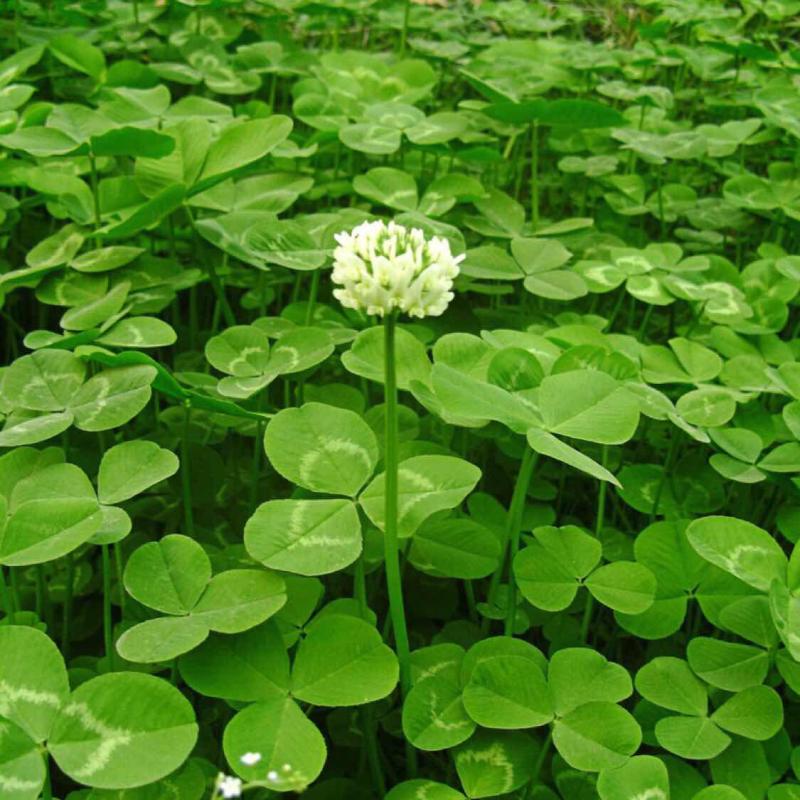 背景 壁纸 花 绿色 绿叶 树叶 植物 桌面 800_800